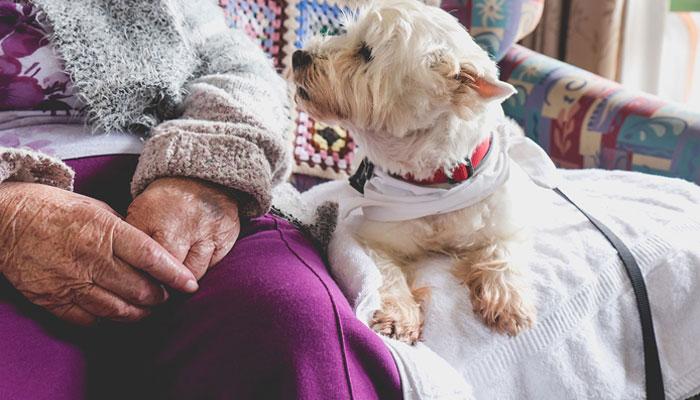 Animaux pour les personnes âgées